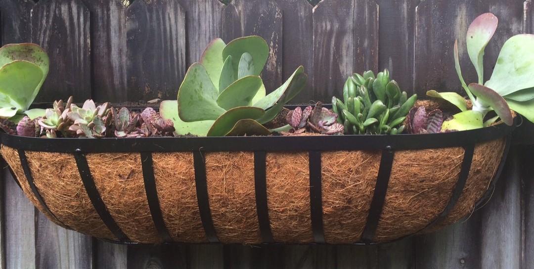 Succulent Planter Windowbox