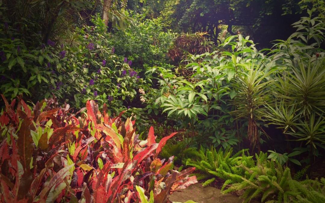 Visiting the Sunken Gardens, St. Petersburg, Florida