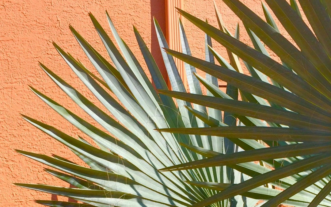 Wall and Plant Color Combinations