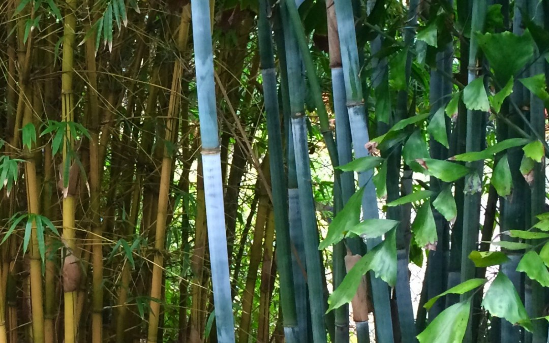 Is Bamboo Bad?