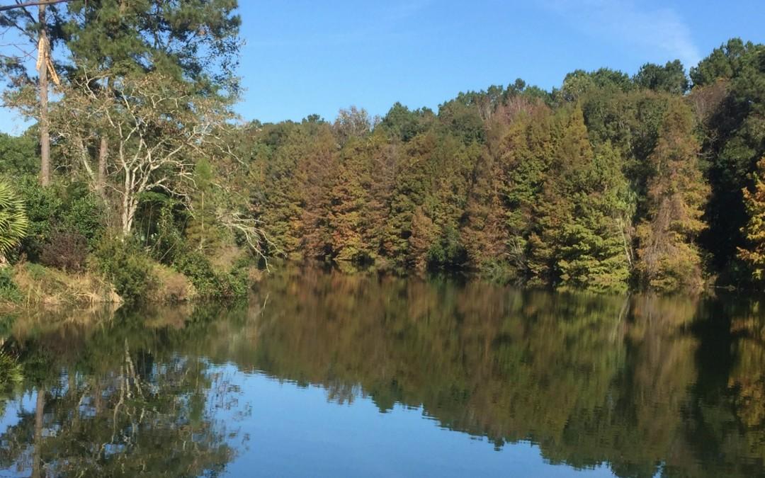 Visiting Coastal Georgia Botanical Garden