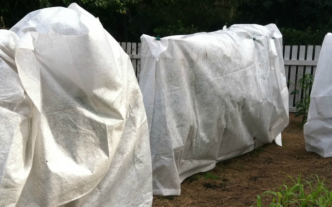 Frost Protection in the Garden