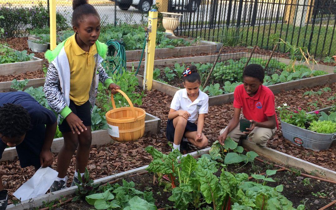 DIY Backyard Gardening Ideas for Kids