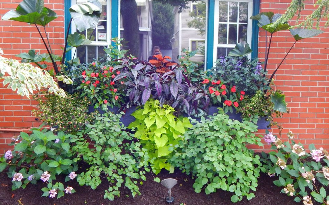 How to Apply Fertilizer to Potted Plants